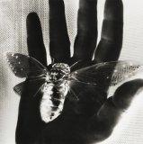 Untitled (Cicada) - Details