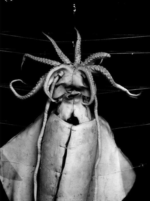 Untitled (Calamar) - Details