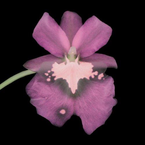 Orchid #177 - Details
