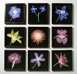 Works from the Flower Cabinet series<br> installed at England & Co, 2009 - image