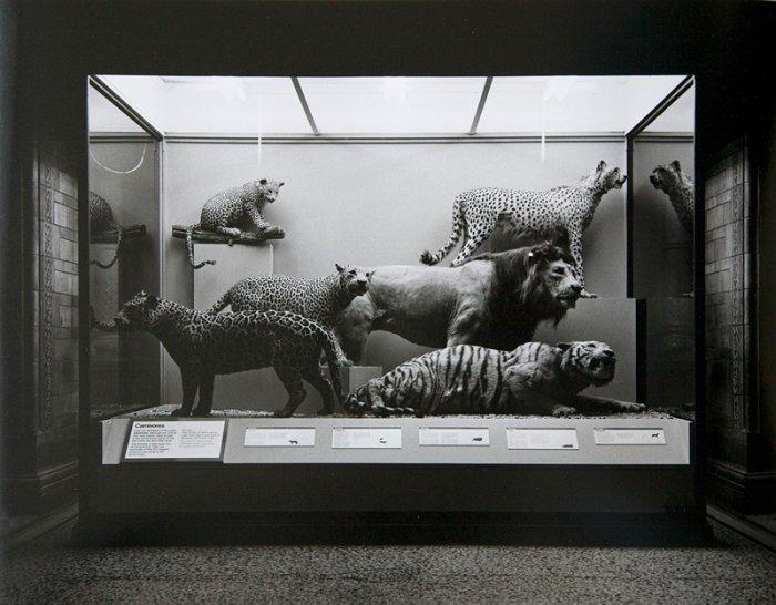 Carnivores - Details